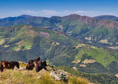 Pottoks au sommet de l'Haltzamendi