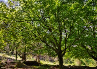Dans la forêt au pied de la Rhune
