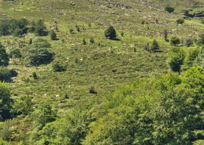 sur le chemin de la Rhune depuis le col de St Ignance